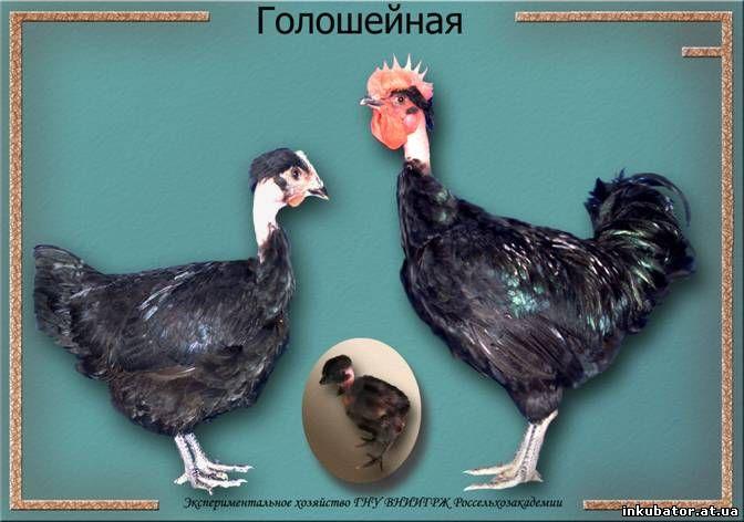 porno-zhopi-bolshoy